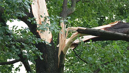 Tree Failures<span class='post-subtitle'>from Storms</span>
