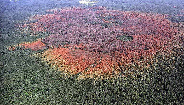Areas affected by the Southern Pine Beetle