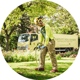 Fertilisation and Soil Care Tree Service