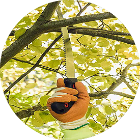 Pruning Tree Service