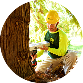 Tree Risk Assessments