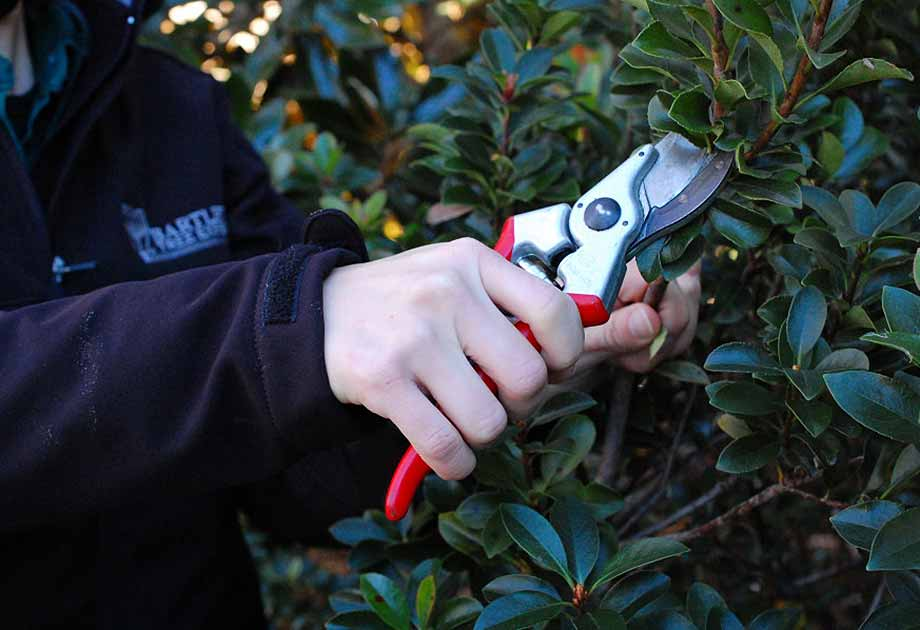Winter Tree Pruning: When and Why